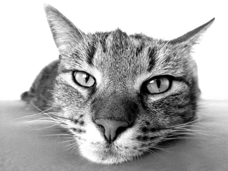 Proste wskazówki i praktyczne porady dotyczące pielęgnacji kota